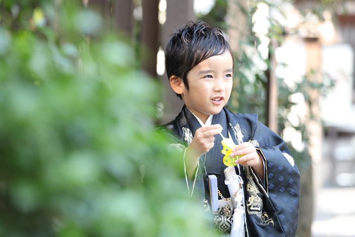 出張撮影KidsPhotoのブログ-氷川神社 出張撮影