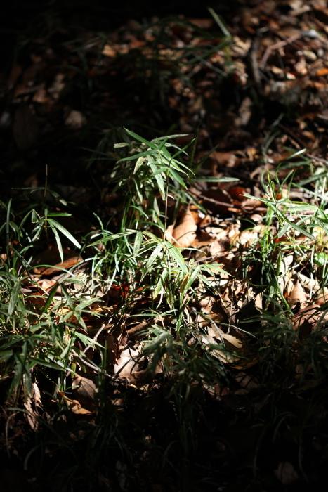 出張撮影KidsPhotoのブログ-明治神宮 風景