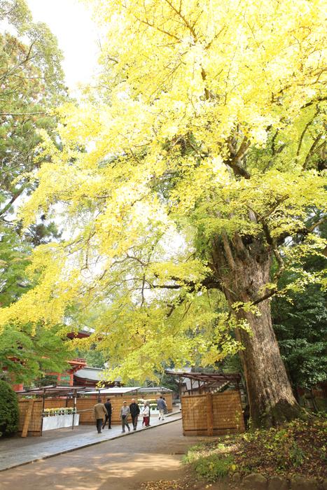 出張撮影KidsPhotoのブログ-香取神宮 七五三写真