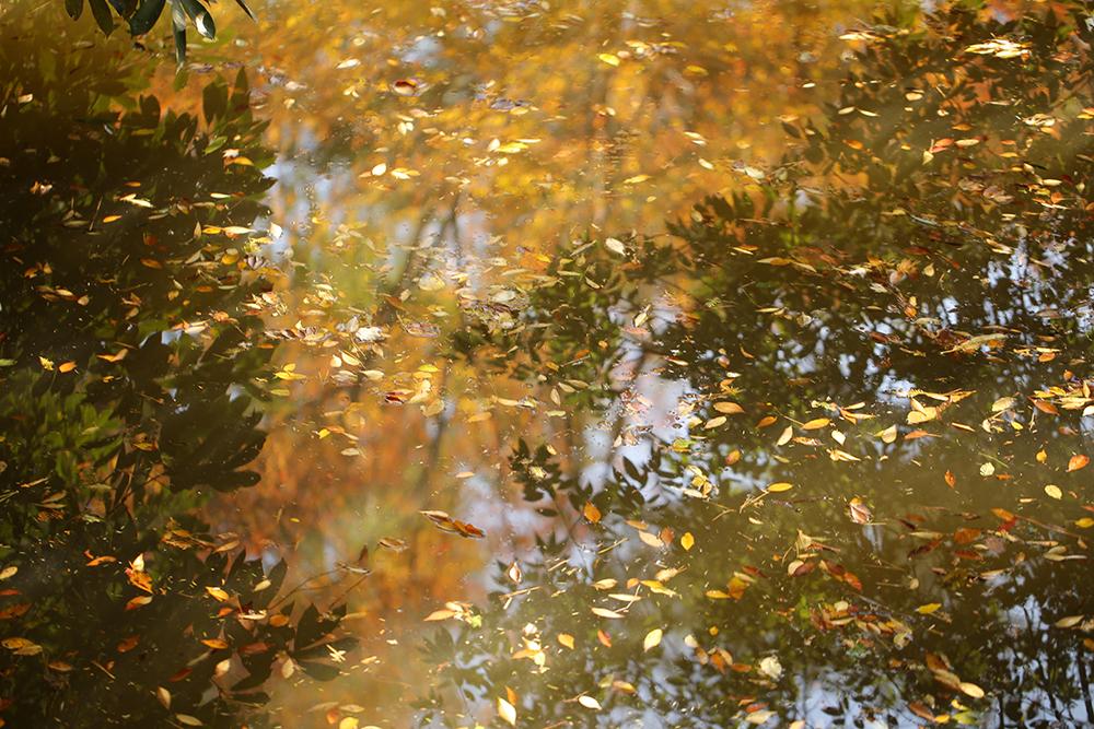 大宮氷川神社の池