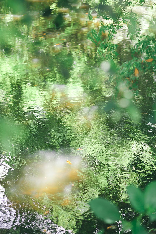 池の波紋 大宮氷川神社