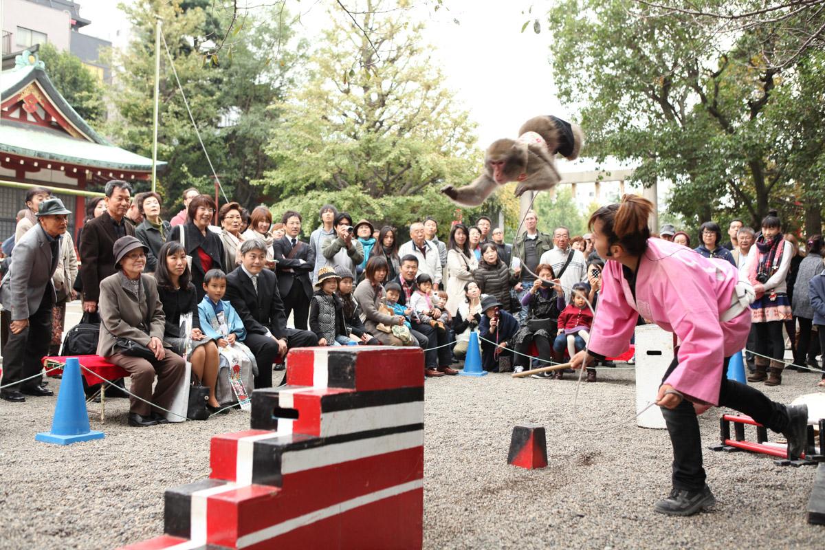 大観衆の前でジャンプを成功させたお猿