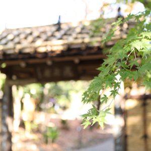 白髭神社で七五三の出張撮影