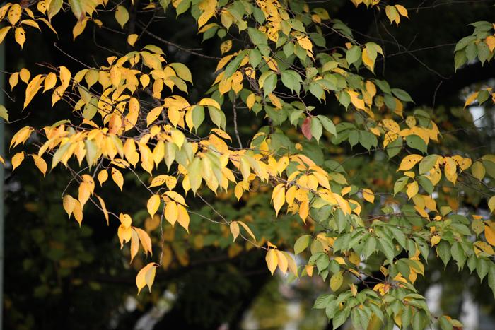 出張撮影KidsPhotoのブログ-日枝神社の紅葉