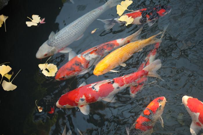 出張撮影KidsPhotoのブログ-浅草神社 お宮参り