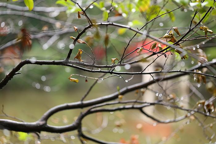 枝についた水滴