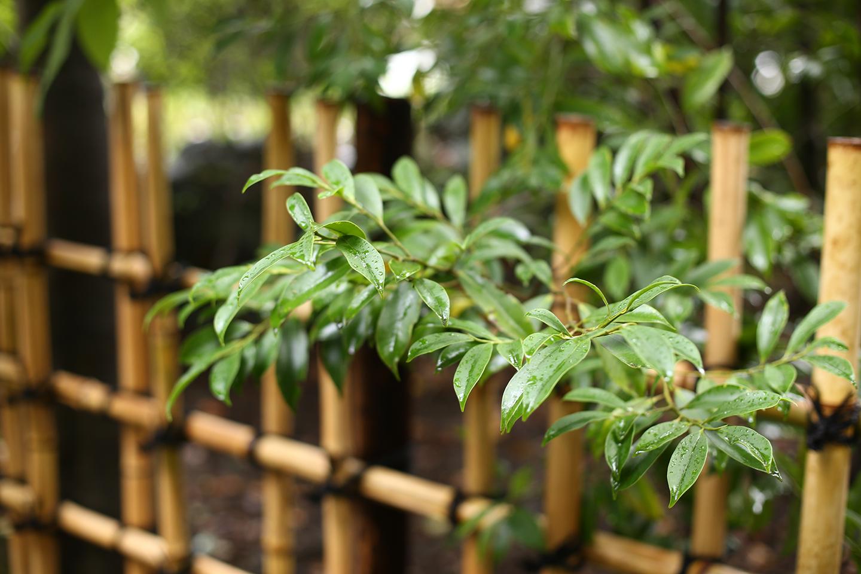 雨上がりの寒川神社