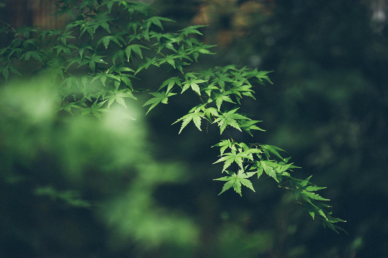 茨城県@出張撮影にオススメの神社一覧