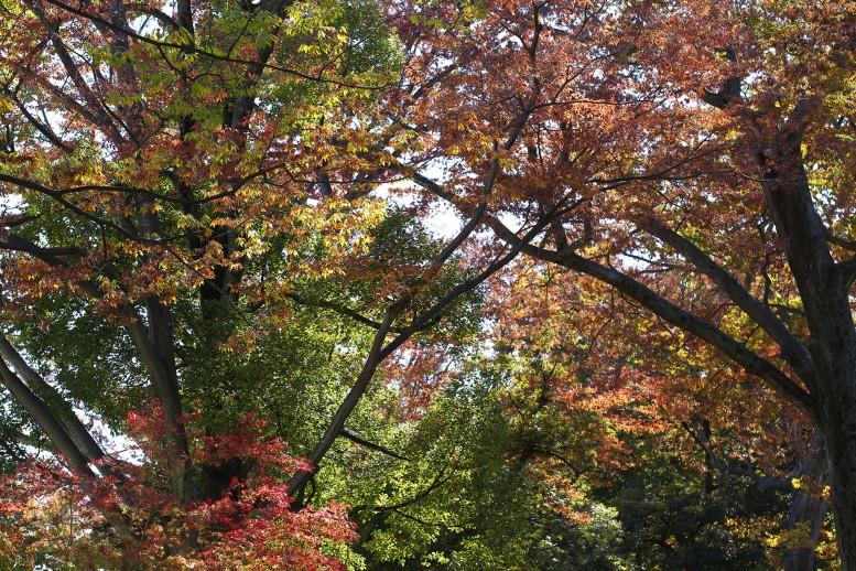 氷川神社 参道の紅葉