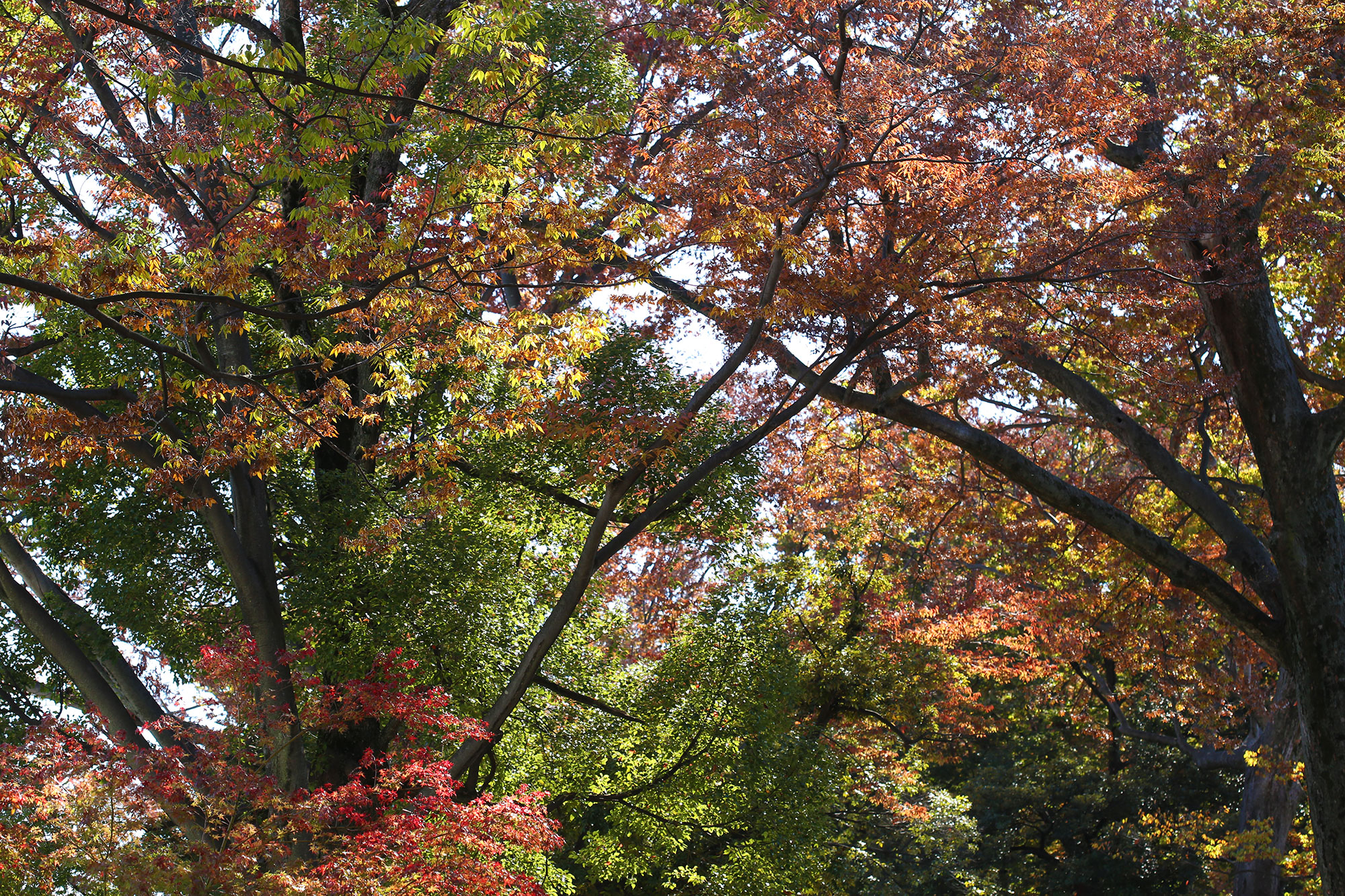 栃木県の神社一覧