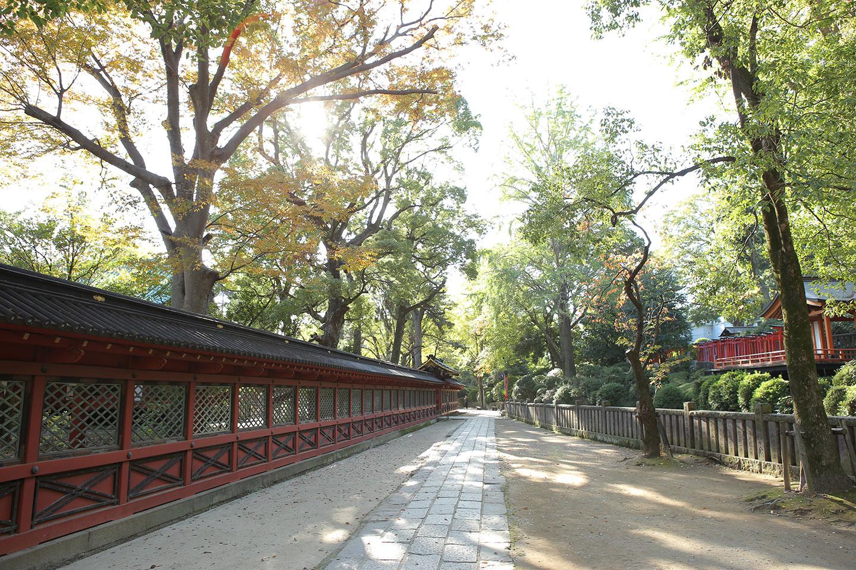 根津神社の透堀