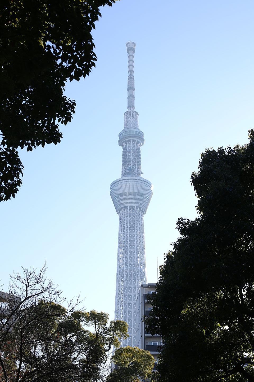 牛嶋神社から見えるスカイツリー