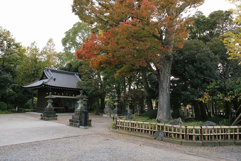 和樂備(わらび)神社の御神輿