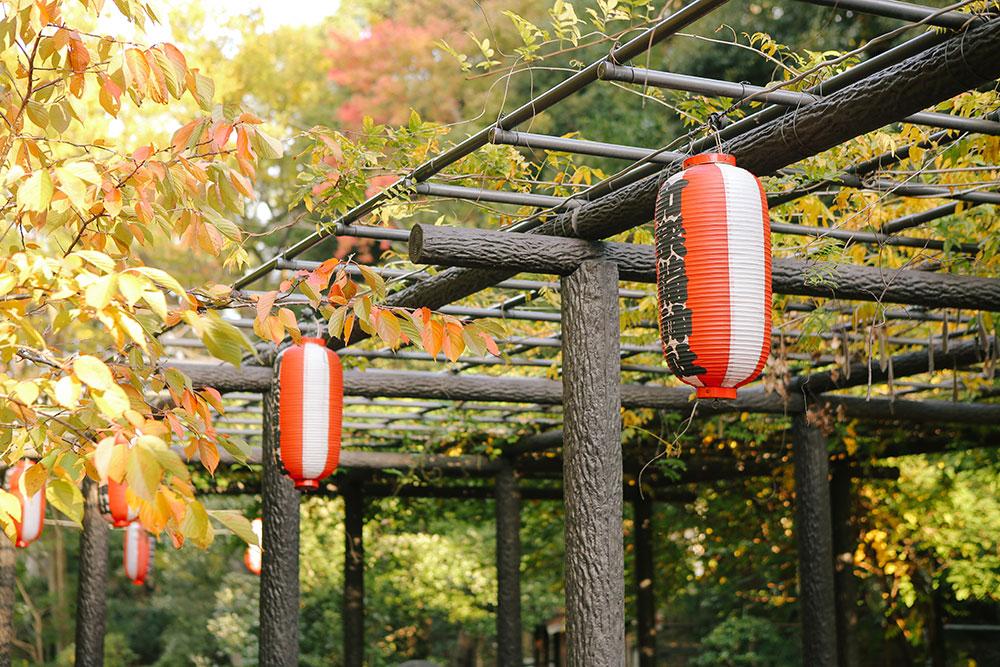 池の前にある藤棚と提灯
