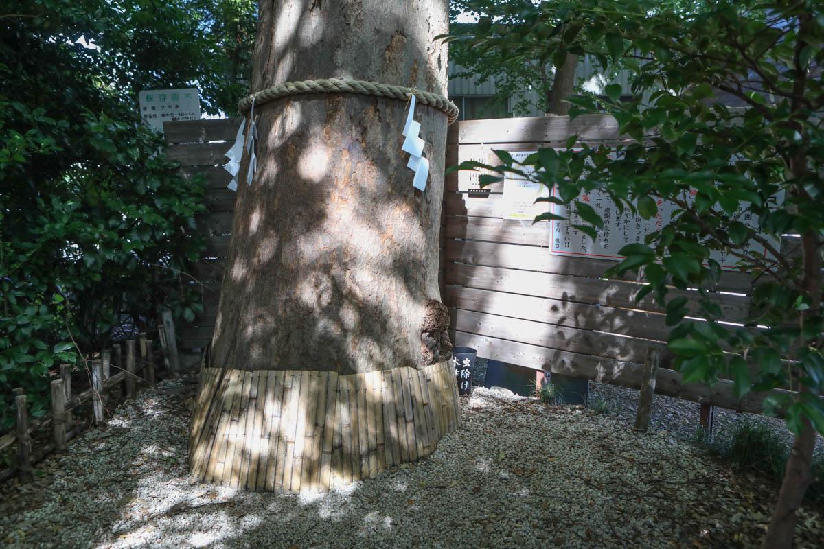 立派な大木