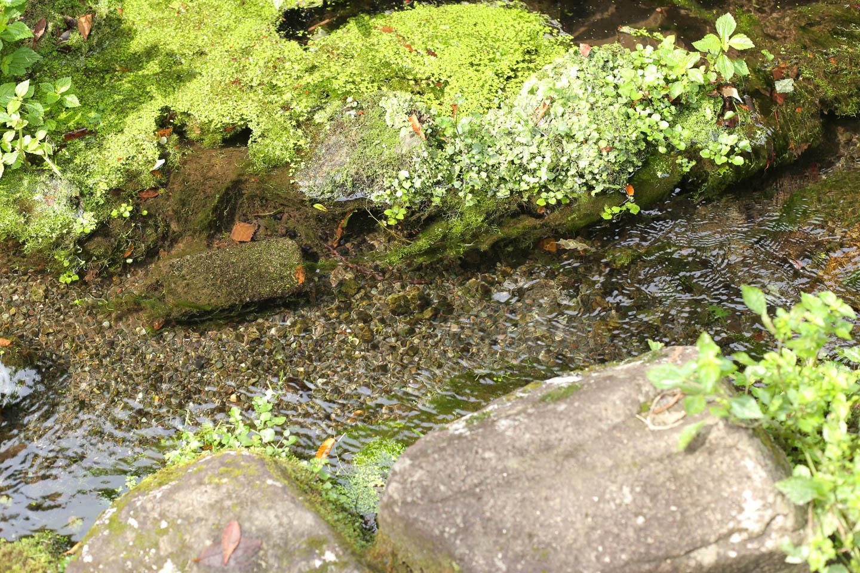小さな小川が流れる
