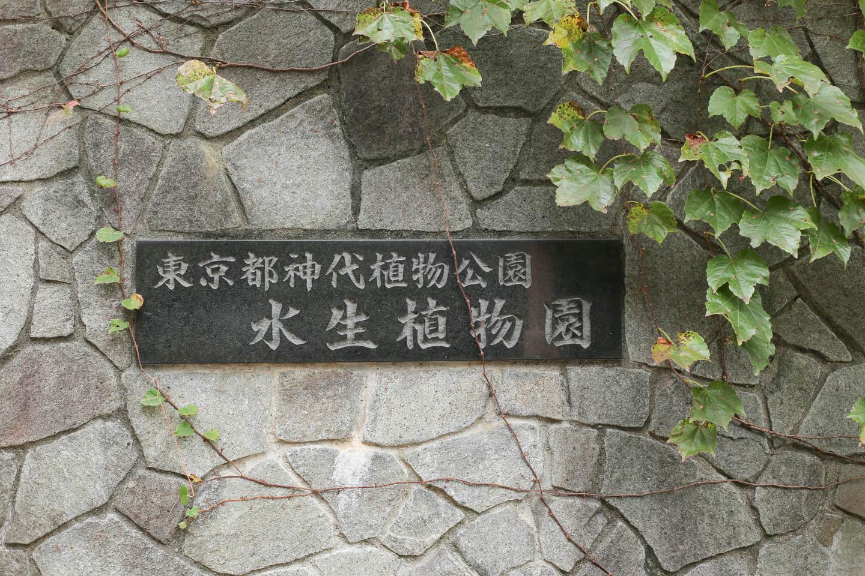 深大植物園