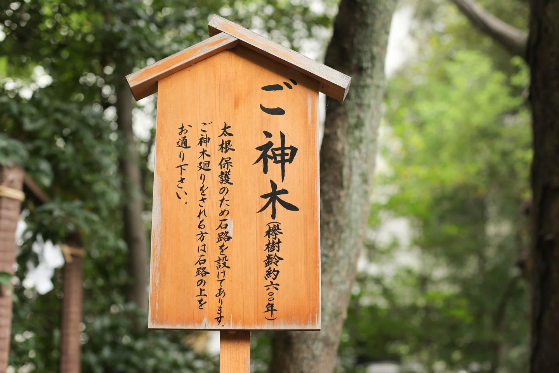樹齢600年のご神木の看板