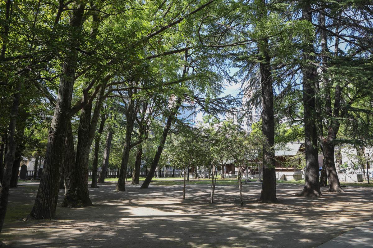 本殿の裏手側 木々が生茂る